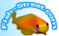 Fish Street Discount Codes & Deals