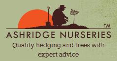 Ashridge Trees